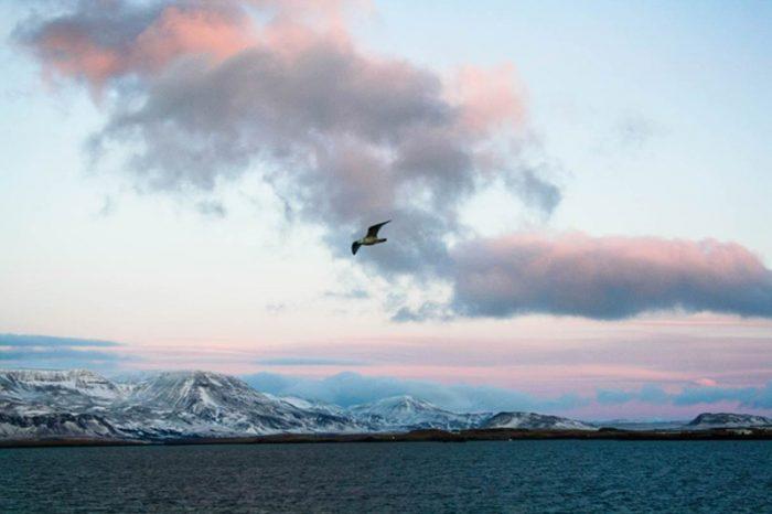 Bericht aus Reykjavik/Island